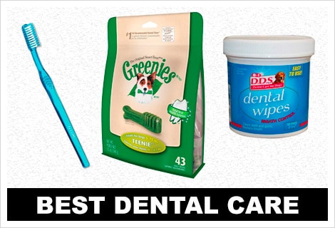 Best dental care items for Great Danes