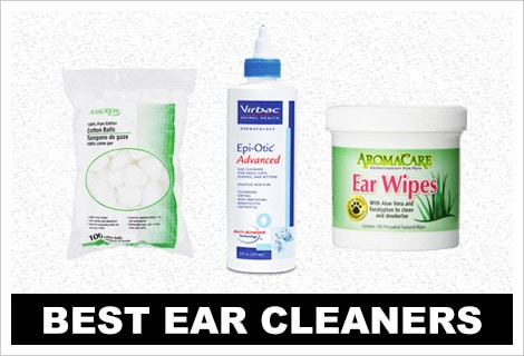 Best ear cleaning supplies for Great Danes