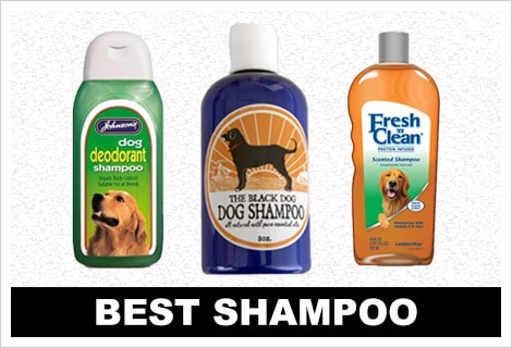 Best shampoo for Great Danes