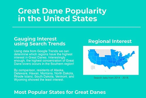 Infographic on Great Dane popularity in the United States.