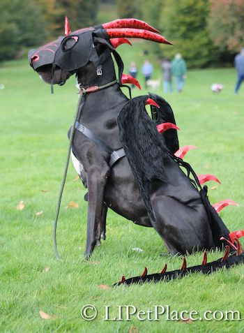 22 Great Dane Costumes Ideas