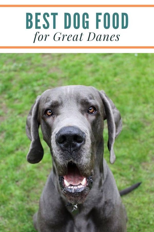 The Best Dog Food For Great Danes It S Probably Not What You Think
