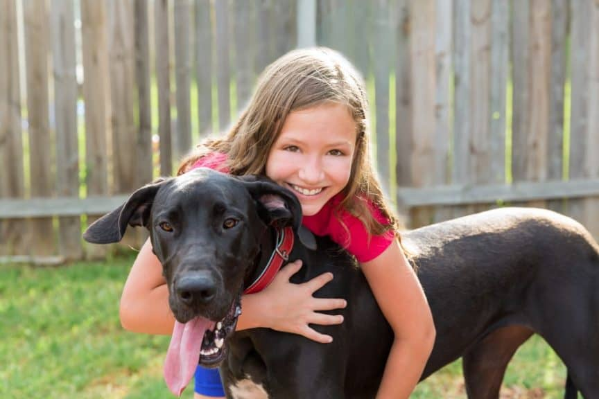 Child hugging young Great Dane dog