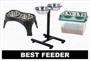 best elevated feeder
