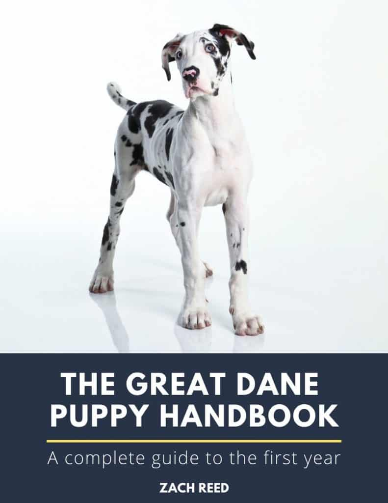 The Great Dane Puppy Handbook