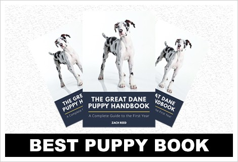 best great dane puppy book