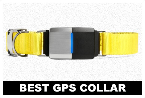 best Great Dane gps collar
