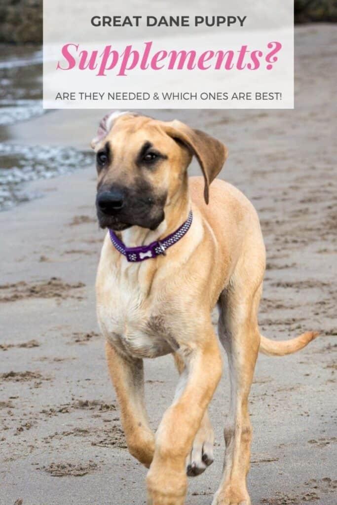 Do Great Dane Puppies Need Supplements?