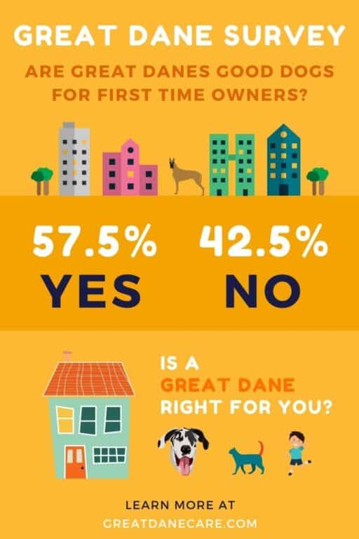 """Survey results from the question """"Are Great Danes good dogs for first time owners"""""""